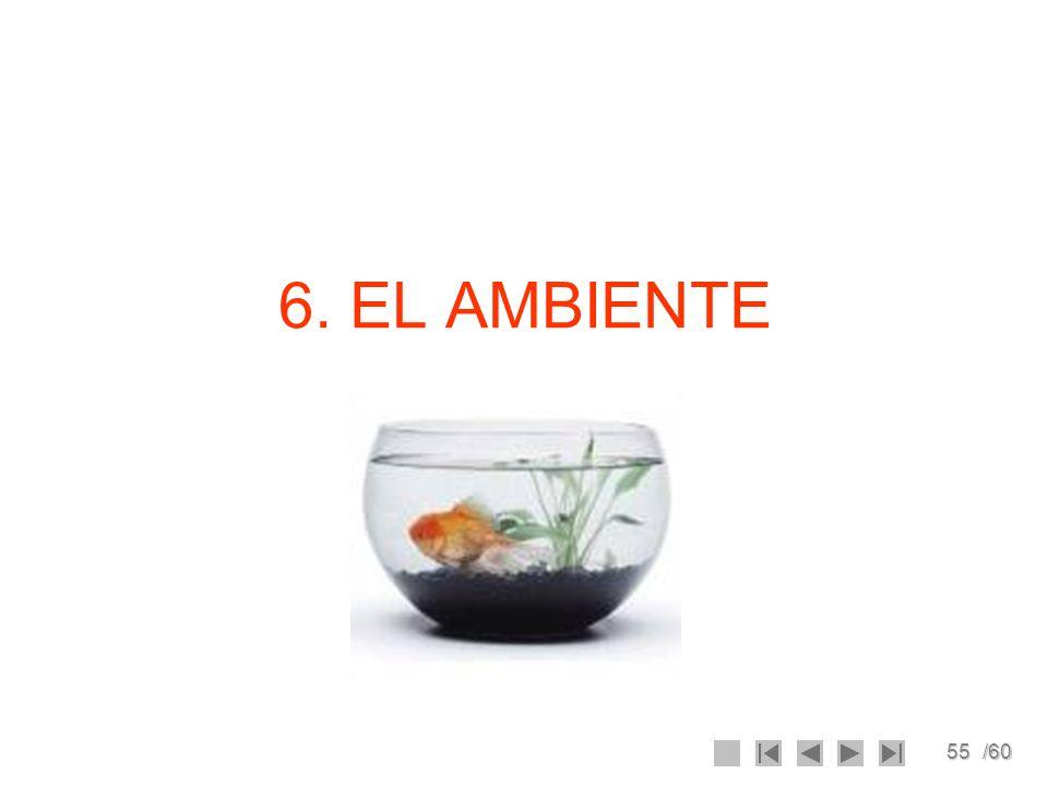 6. EL AMBIENTE