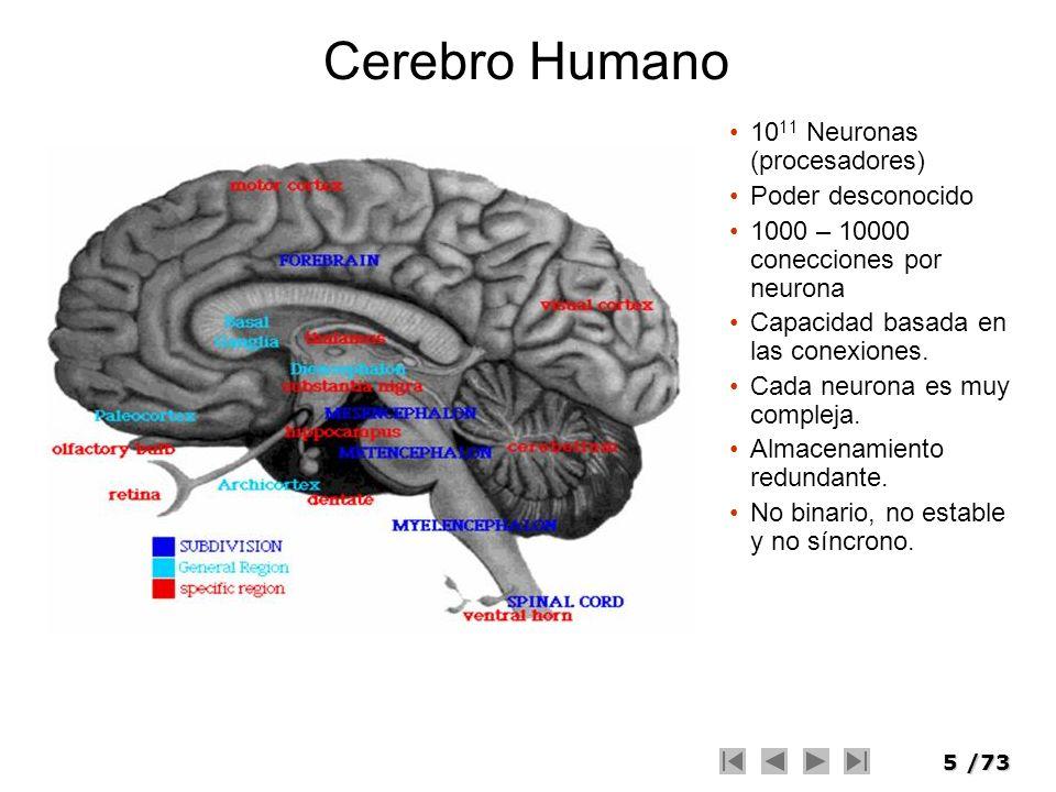 Cerebro Humano 1011 Neuronas (procesadores) Poder desconocido