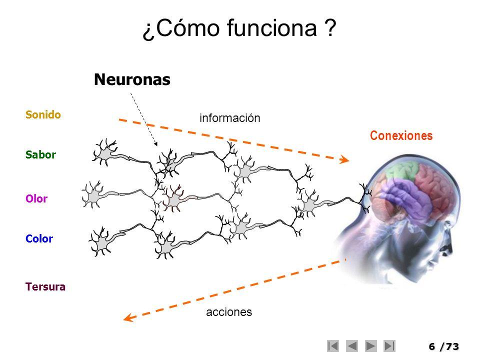 ¿Cómo funciona Neuronas Conexiones información acciones Sonido Sabor