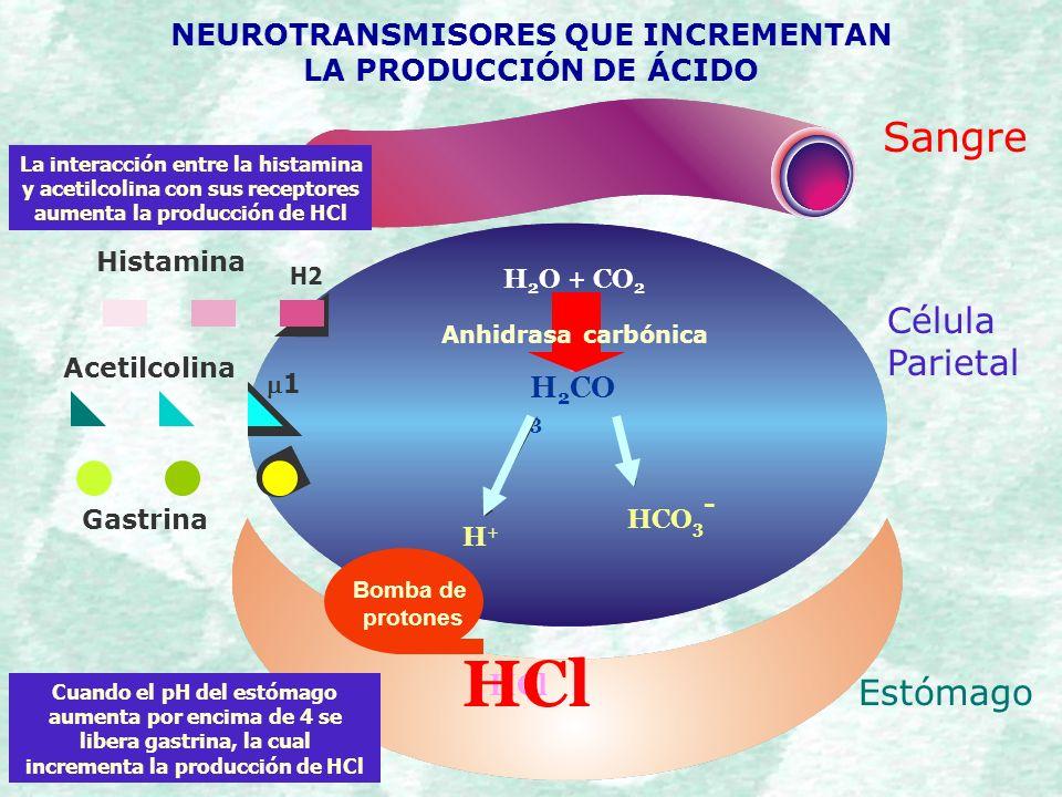 Contemporáneo Funciones De ácido Clorhídrico En El Estómago ...