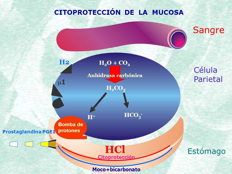 Fantástico Funciones De ácido Clorhídrico En El Estómago Ilustración ...