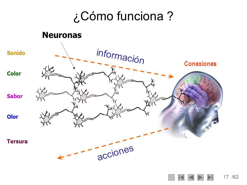 ¿Cómo funciona información acciones Neuronas Conexiones Sonido Color