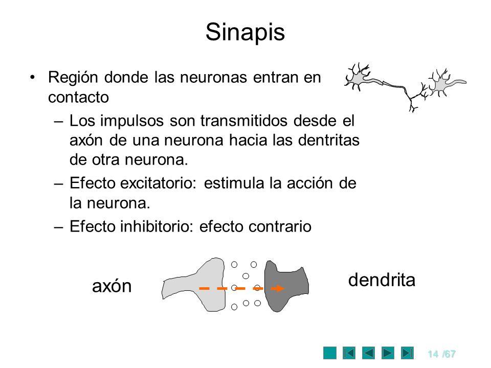Sinapis dendrita axón Región donde las neuronas entran en contacto