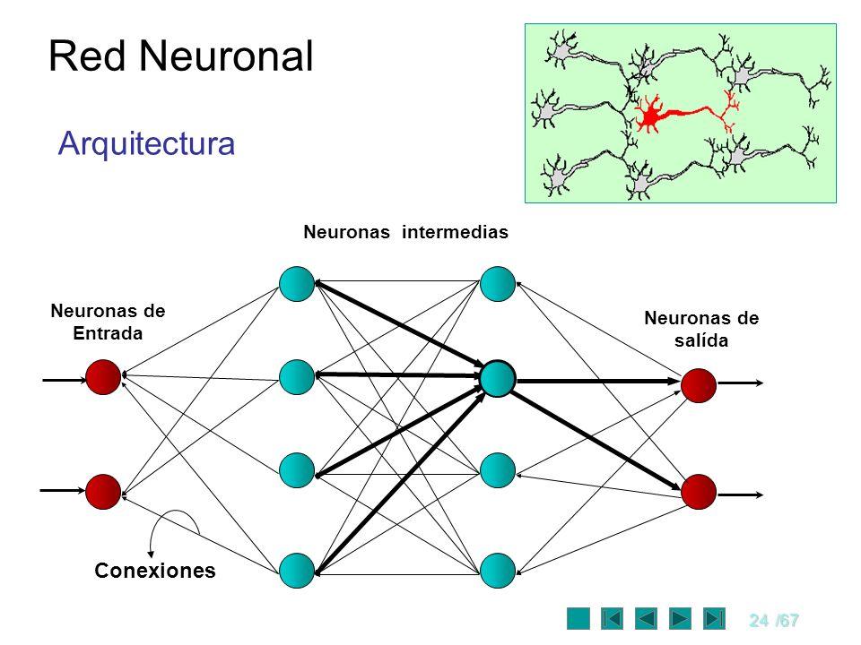 Red Neuronal Arquitectura Conexiones Neuronas intermedias Neuronas de