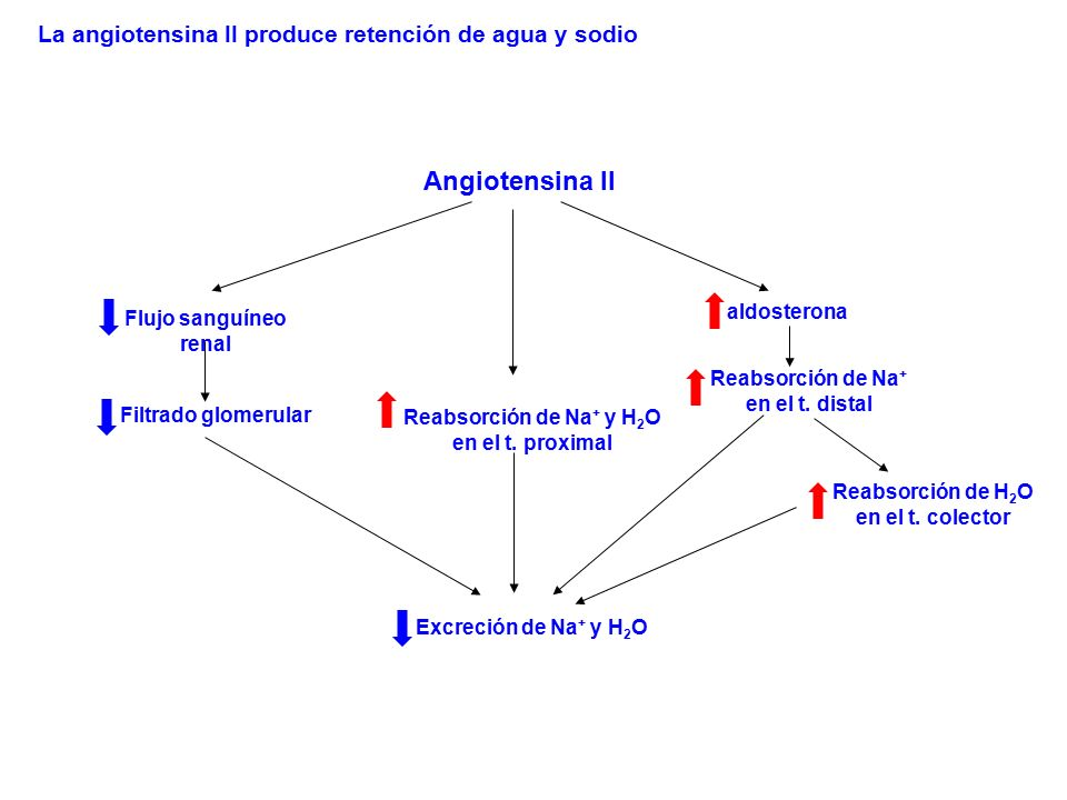 Angiotensina II La angiotensina II produce retención de agua y sodio