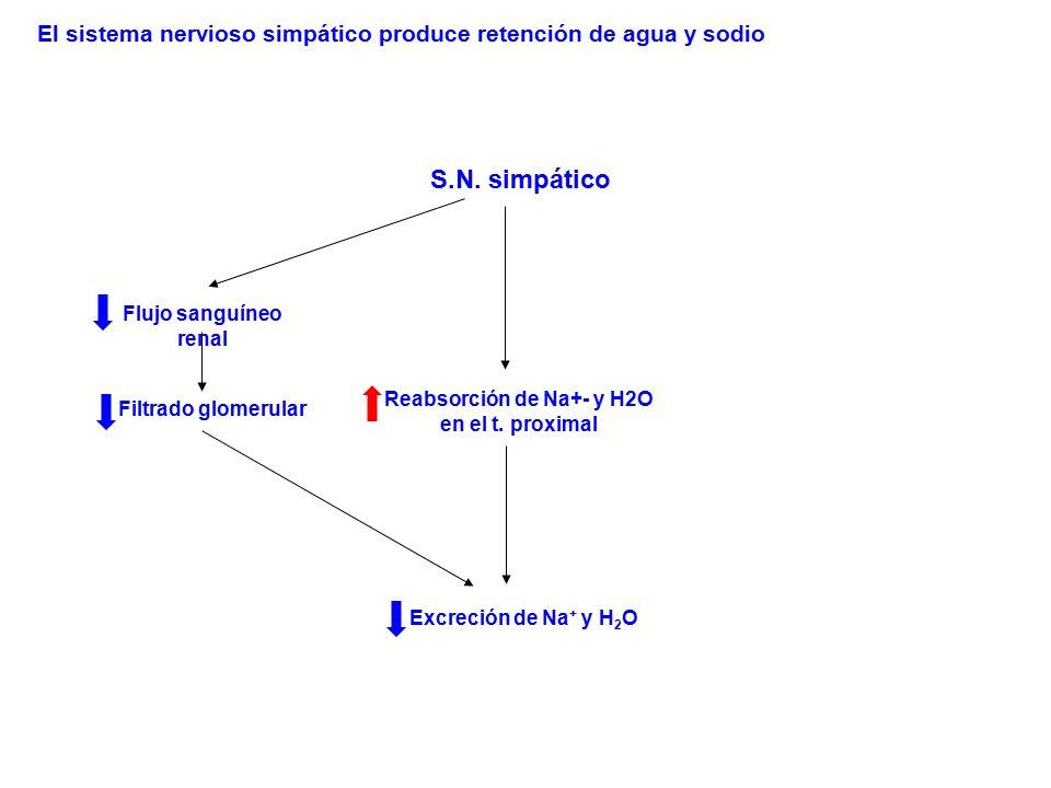 Reabsorción de Na+- y H2O
