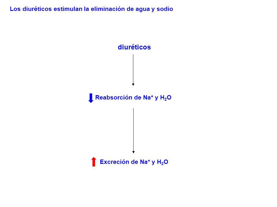diuréticos Los diuréticos estimulan la eliminación de agua y sodio