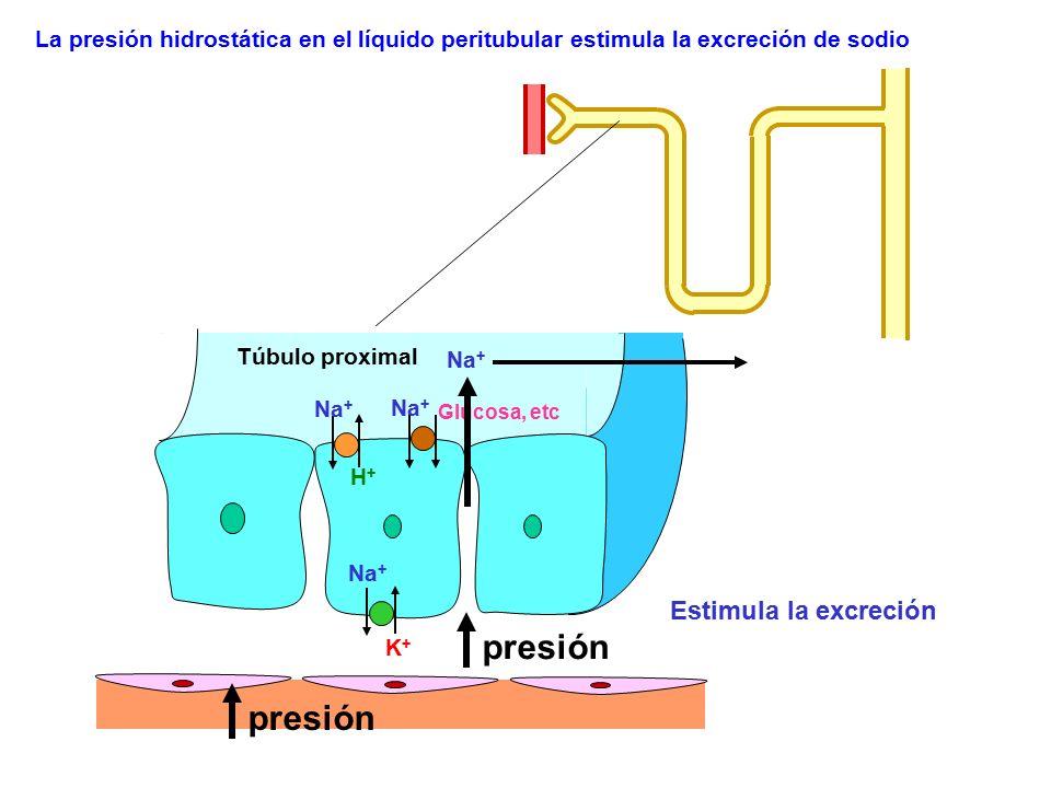 presión presión Estimula la excreción