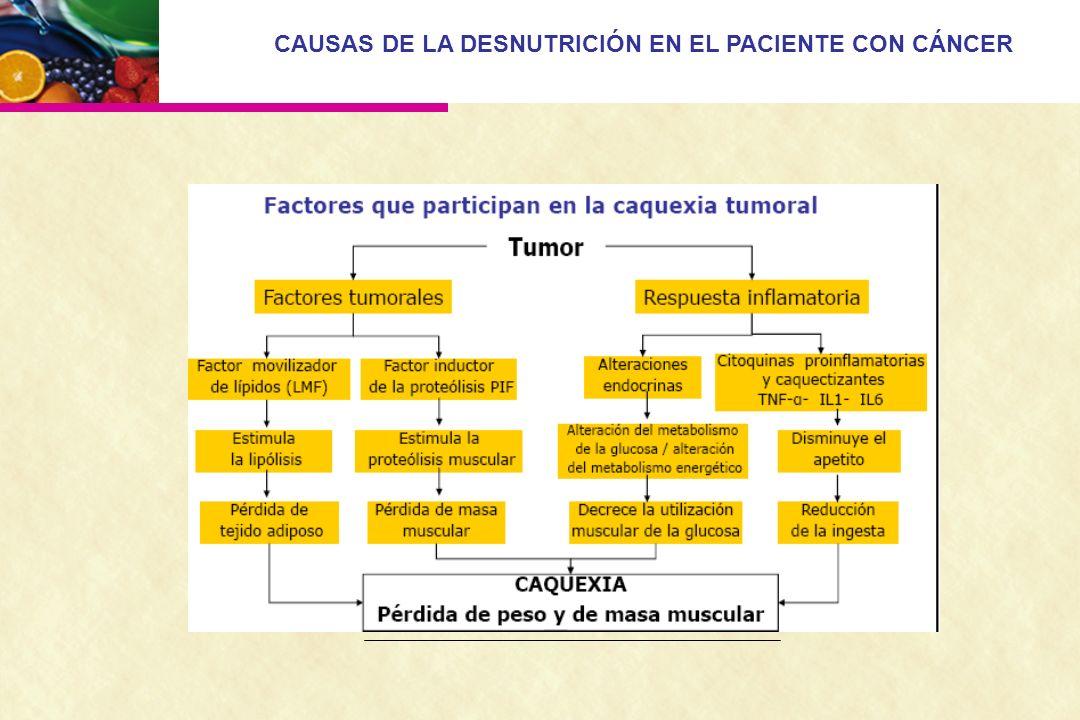 CAUSAS DE LA DESNUTRICIÓN EN EL PACIENTE CON CÁNCER