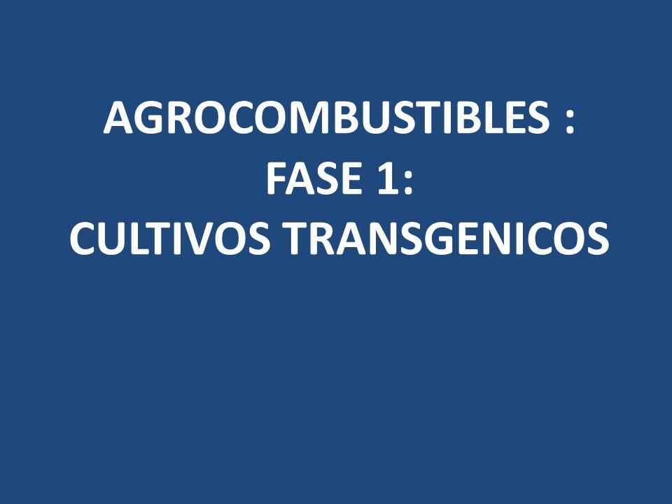 AGROCOMBUSTIBLES : FASE 1: CULTIVOS TRANSGENICOS