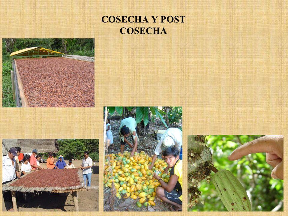 COSECHA Y POST COSECHA