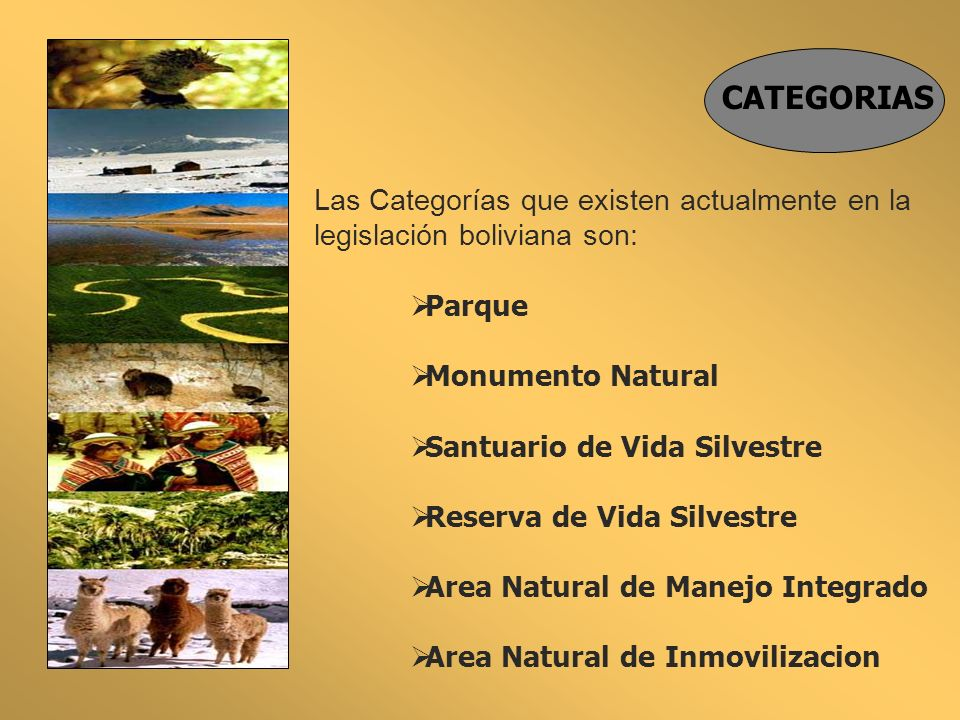 CATEGORIAS Las Categorías que existen actualmente en la legislación boliviana son: Parque. Monumento Natural.