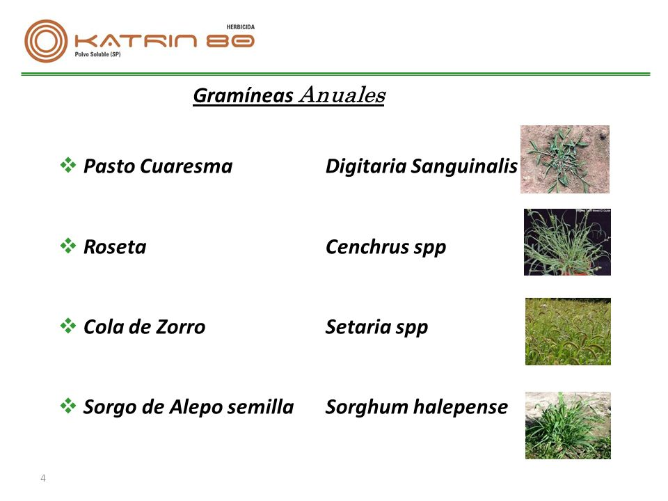 Imazapir 80 sp herbicida sist mico para uso pre y post - Semillas de gramon ...