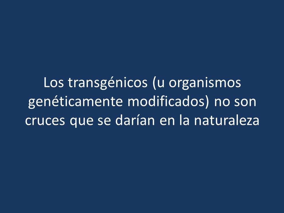 Los transgénicos (u organismos genéticamente modificados) no son cruces que se darían en la naturaleza