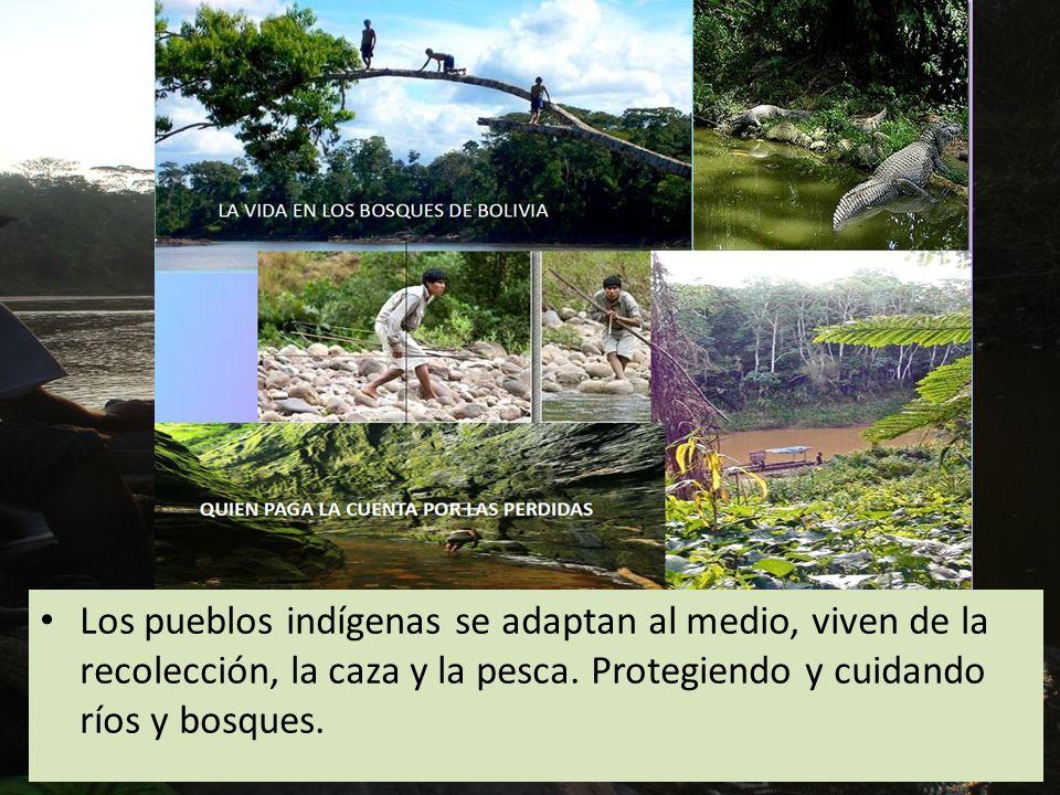 Los pueblos indígenas se adaptan al medio, viven de la recolección, la caza y la pesca.