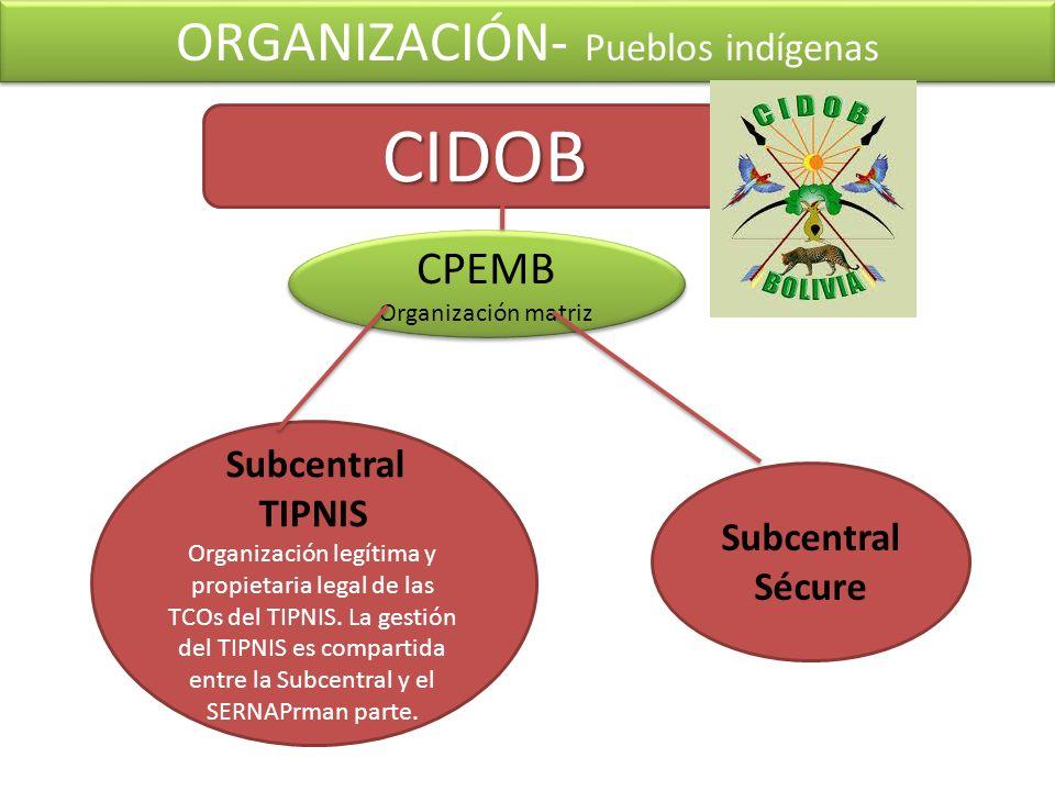 ORGANIZACIÓN- Pueblos indígenas