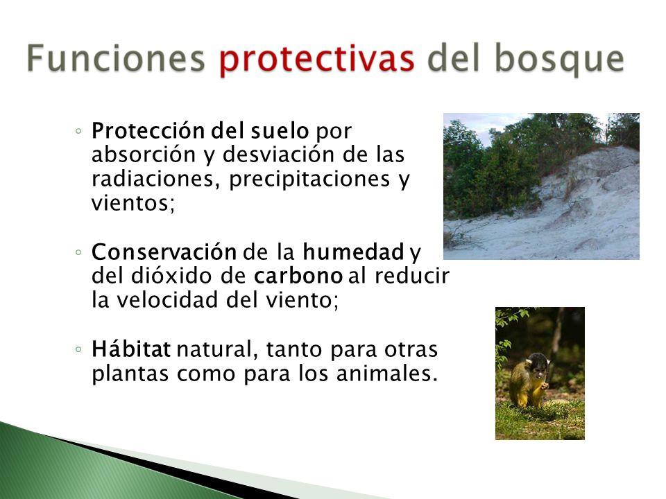 Protección del suelo por absorción y desviación de las radiaciones, precipitaciones y vientos;