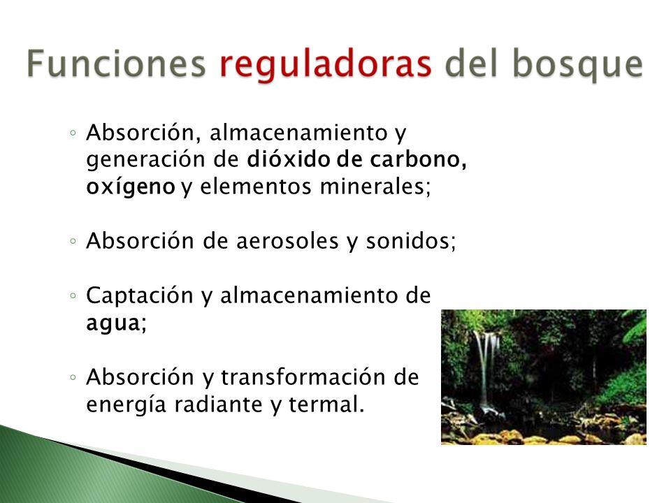 Absorción, almacenamiento y generación de dióxido de carbono, oxígeno y elementos minerales;