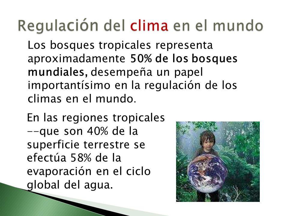 Los bosques tropicales representa aproximadamente 50% de los bosques mundiales, desempeña un papel importantísimo en la regulación de los climas en el mundo.