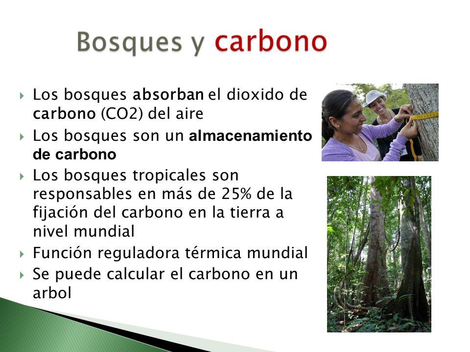 Los bosques absorban el dioxido de carbono (CO2) del aire