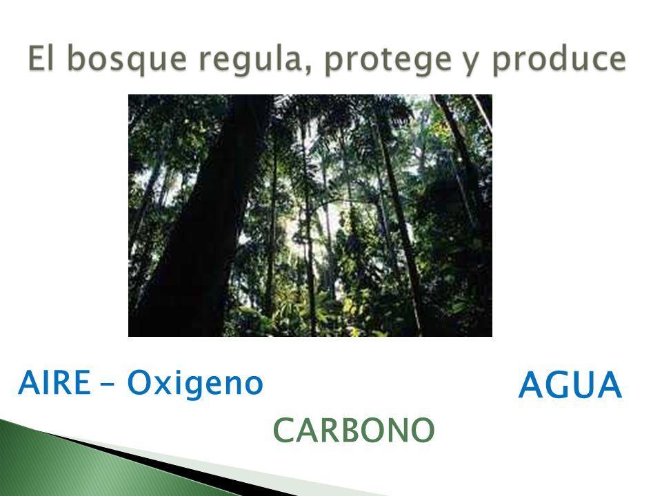 AIRE – Oxigeno AGUA CARBONO