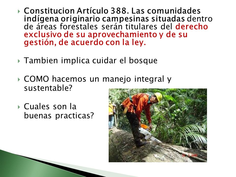 Constitucion Artículo 388