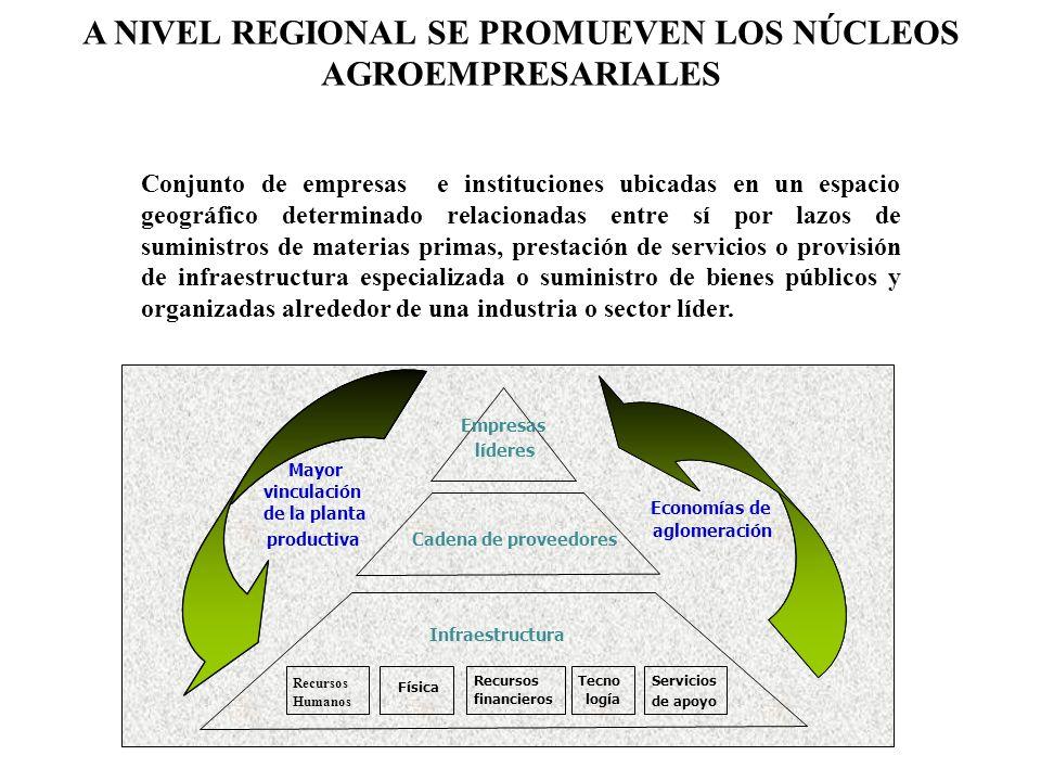 A NIVEL REGIONAL SE PROMUEVEN LOS NÚCLEOS AGROEMPRESARIALES