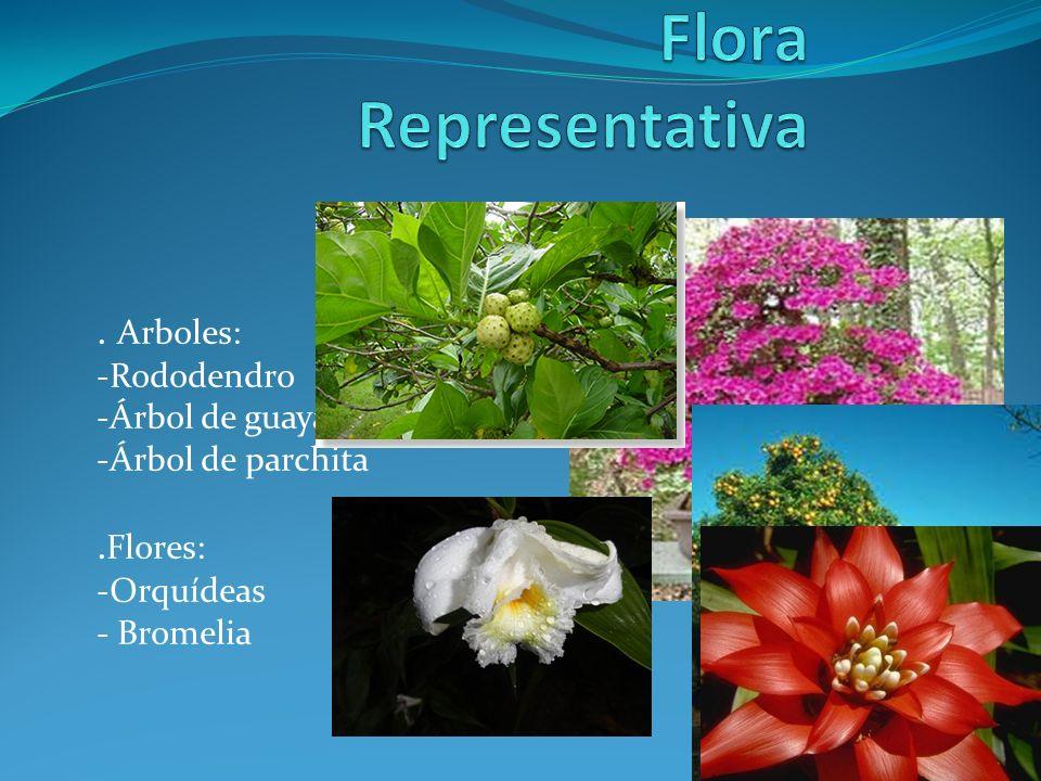 Biorregion oriental que es una biorregion ppt descargar - Rododendro arbol ...