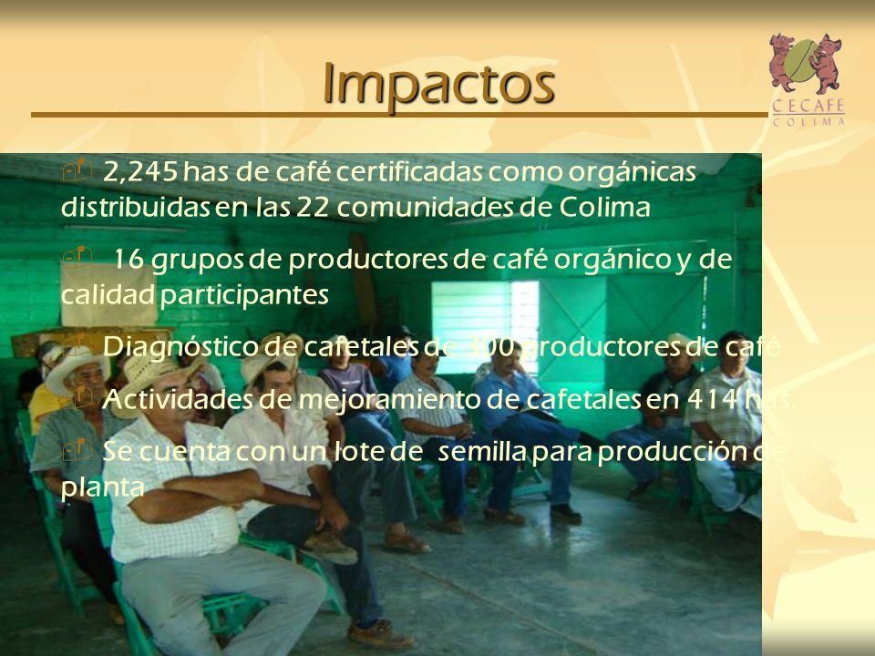 Impactos 2,245 has de café certificadas como orgánicas distribuidas en las 22 comunidades de Colima.