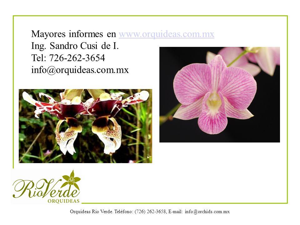 Mayores informes en www.orquideas.com.mx