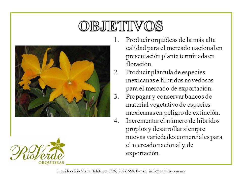 OBJETIVOS Producir orquídeas de la más alta calidad para el mercado nacional en presentación planta terminada en floración.