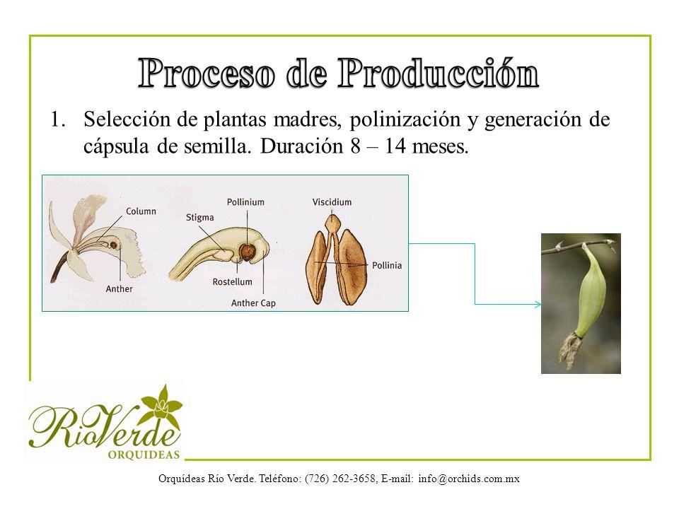 Proceso de Producción Selección de plantas madres, polinización y generación de cápsula de semilla.