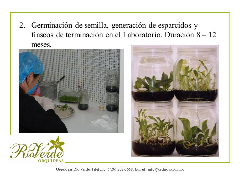 2. Germinación de semilla, generación de esparcidos y frascos de terminación en el Laboratorio.