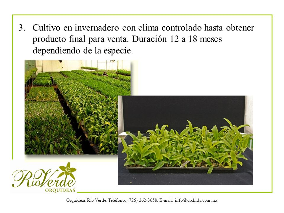 3. Cultivo en invernadero con clima controlado hasta obtener producto final para venta.