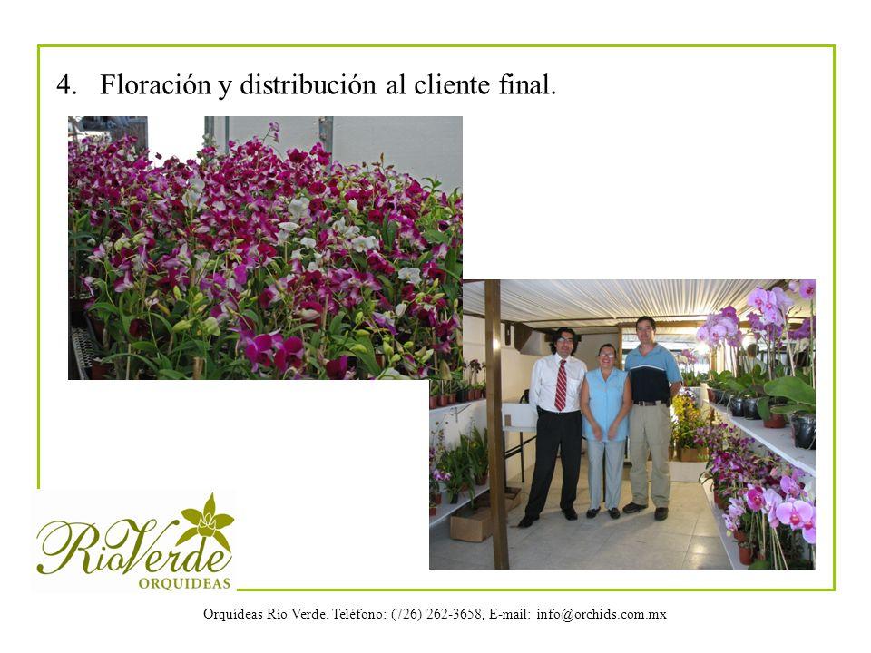 4. Floración y distribución al cliente final.