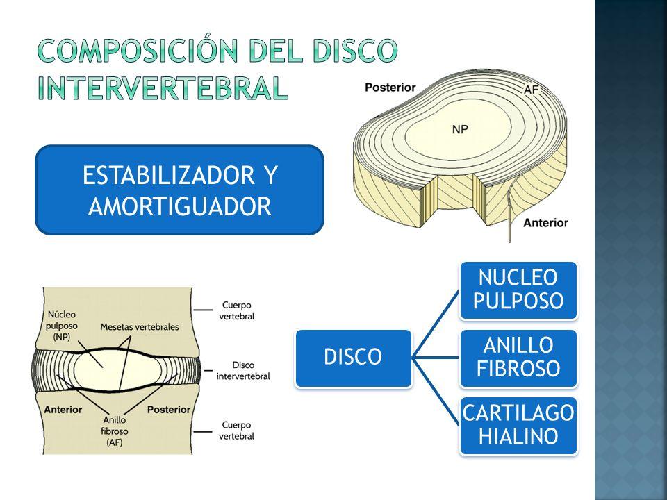 Lujoso Anatomía Del Disco Vertebral Ornamento - Imágenes de Anatomía ...