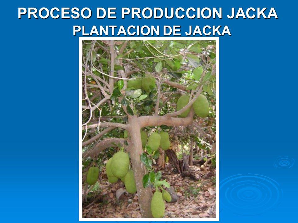 PROCESO DE PRODUCCION JACKA