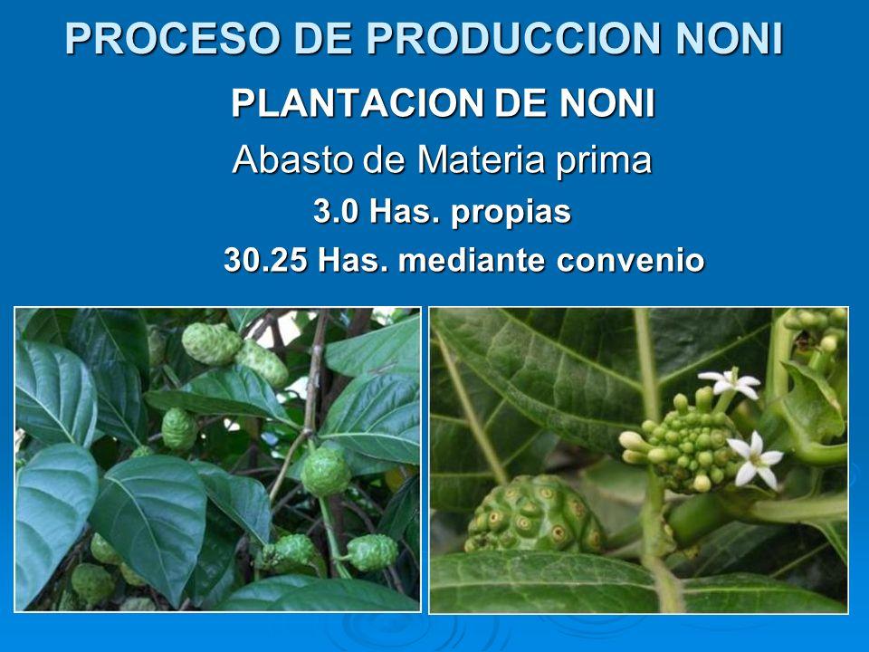 PROCESO DE PRODUCCION NONI