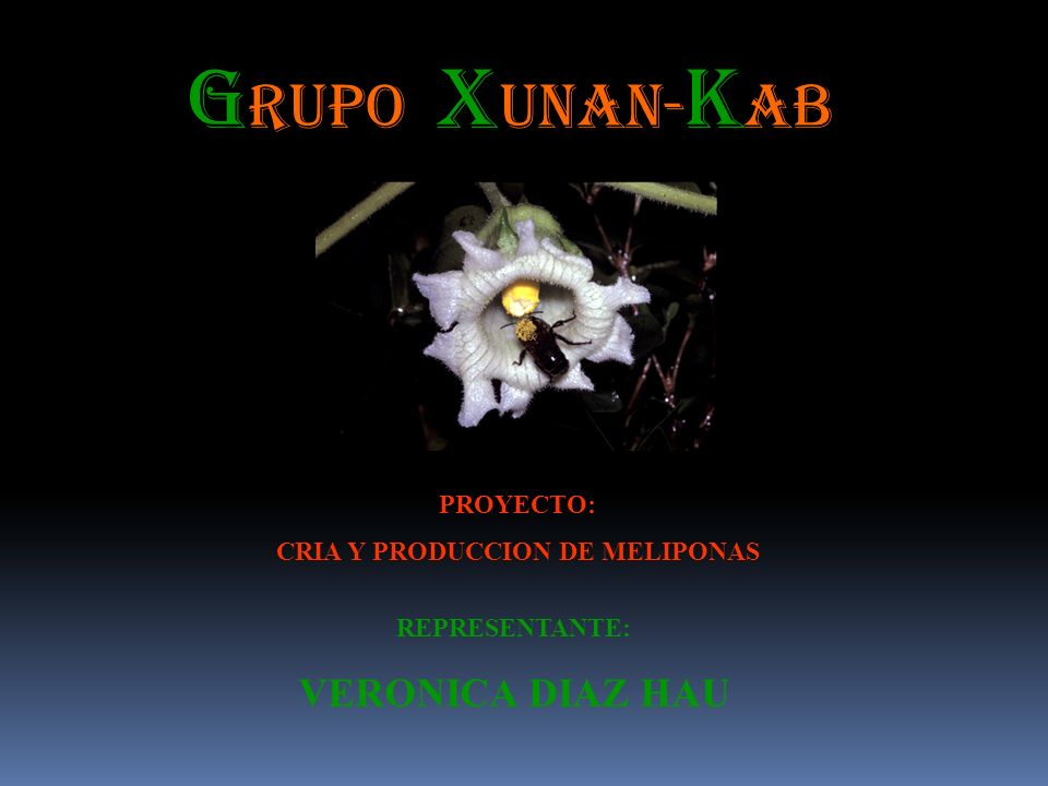 CRIA Y PRODUCCION DE MELIPONAS