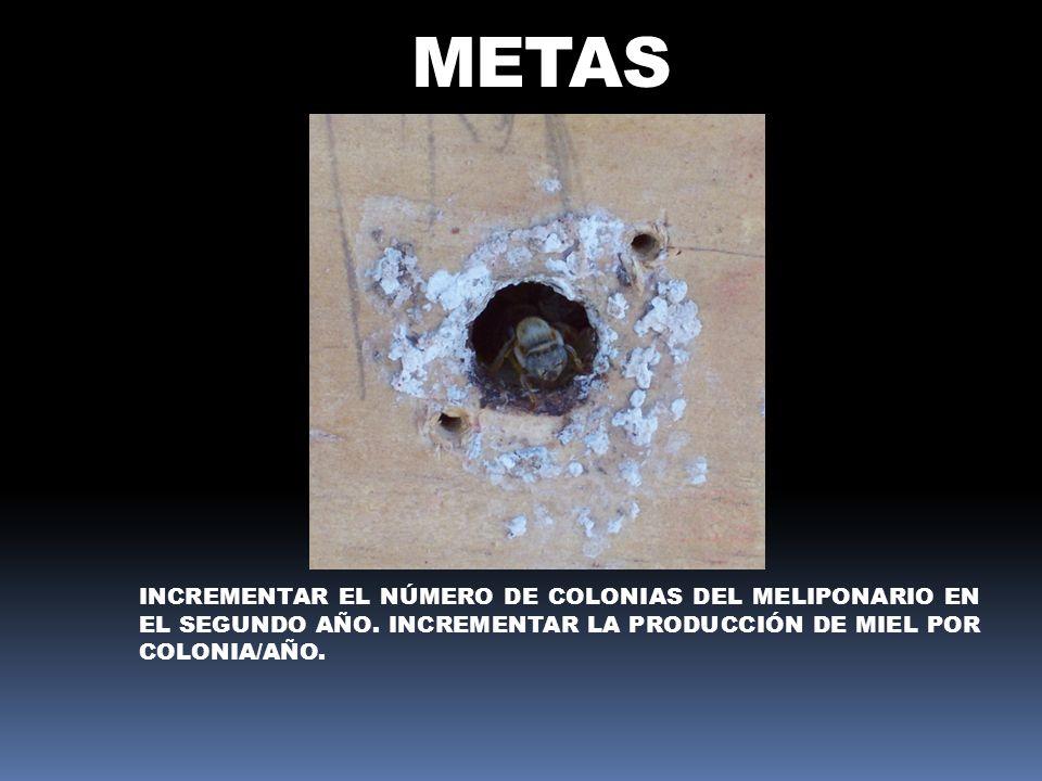 METASIncrementar el número de colonias del meliponario en el segundo año.