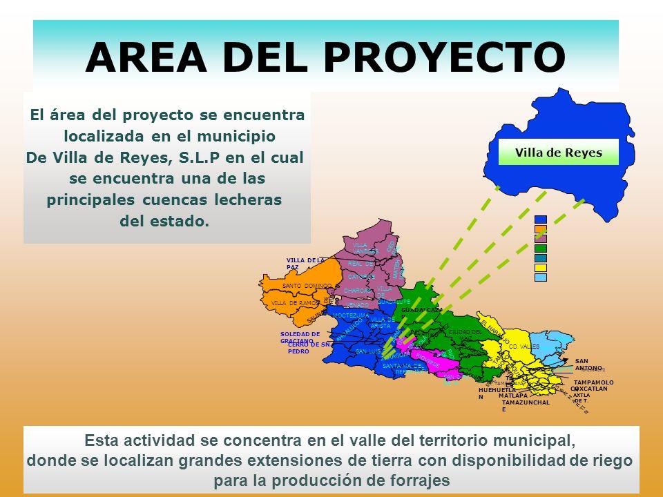 AREA DEL PROYECTO El área del proyecto se encuentra. localizada en el municipio. De Villa de Reyes, S.L.P en el cual.