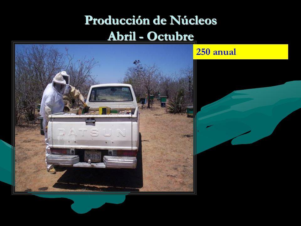 Producción de Núcleos Abril - Octubre