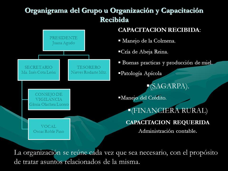 Organigrama del Grupo u Organización y Capacitación Recibida
