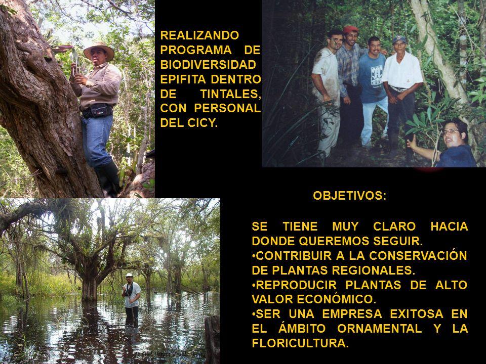REALIZANDO PROGRAMA DE BIODIVERSIDAD EPIFITA DENTRO DE TINTALES, CON PERSONAL DEL CICY.