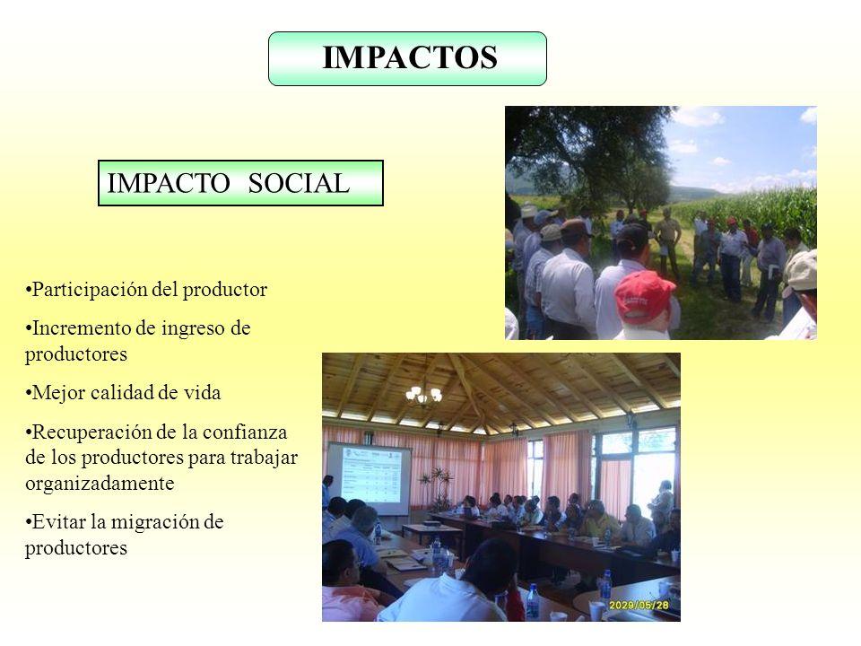 IMPACTOS IMPACTO SOCIAL Participación del productor