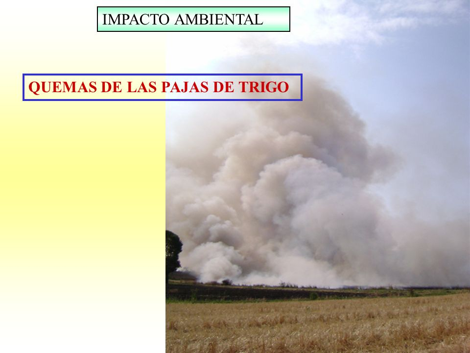 IMPACTO AMBIENTAL QUEMAS DE LAS PAJAS DE TRIGO