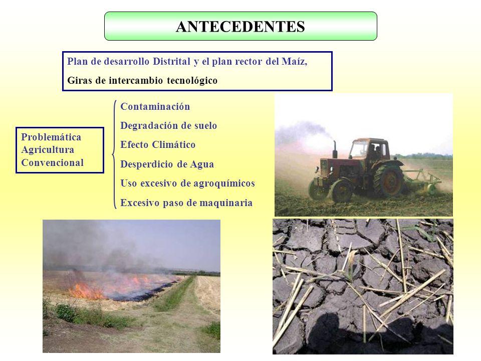 ANTECEDENTES Plan de desarrollo Distrital y el plan rector del Maíz,