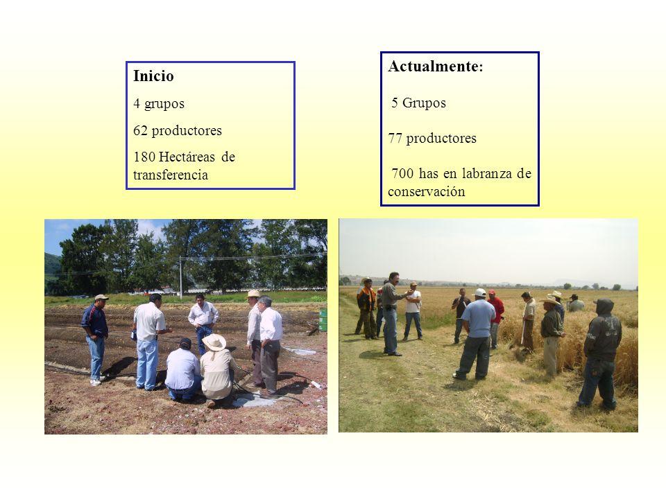 Actualmente: Inicio 4 grupos 5 Grupos 62 productores 77 productores