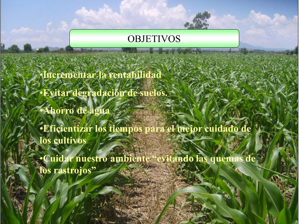 OBJETIVOS Incrementar la rentabilidad. Evitar degradación de suelos. Ahorro de agua.
