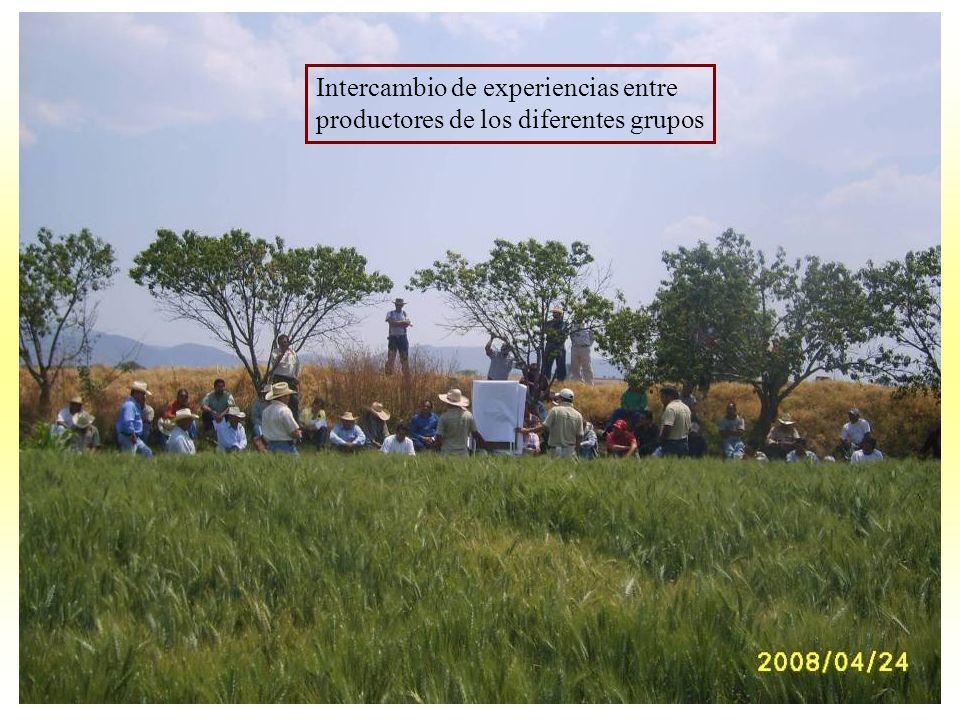 Intercambio de experiencias entre productores de los diferentes grupos